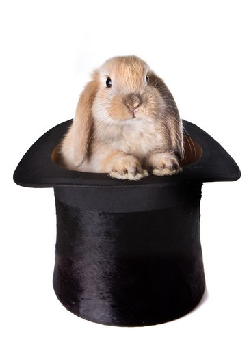 SEO rabbit hat trick